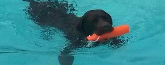 sicherer Badespaß für Hunde