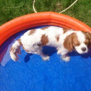debbie-pool
