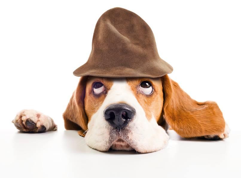 Soko Wuff Krimiwanderung mit Hund, Wo ist Berta?