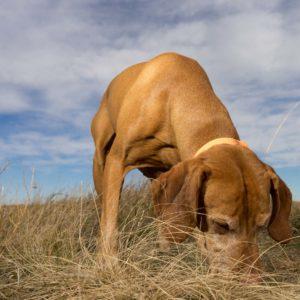 Nasengaudi für deinen Hund