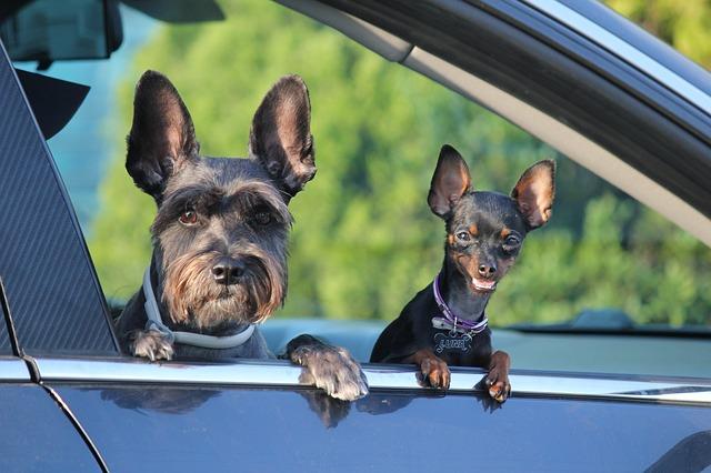Hundeführerschein Active Dogs