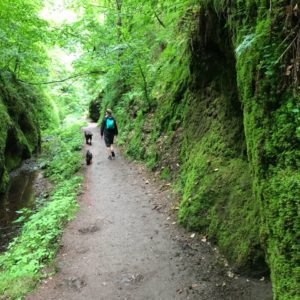 Landgrabenschlucht Thüringer Wald