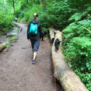 Thüringer Wald mit Hund