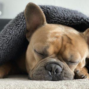 Entspannung für Hibbelhunde